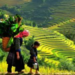 mu_cang_chai__travel_for_children__132